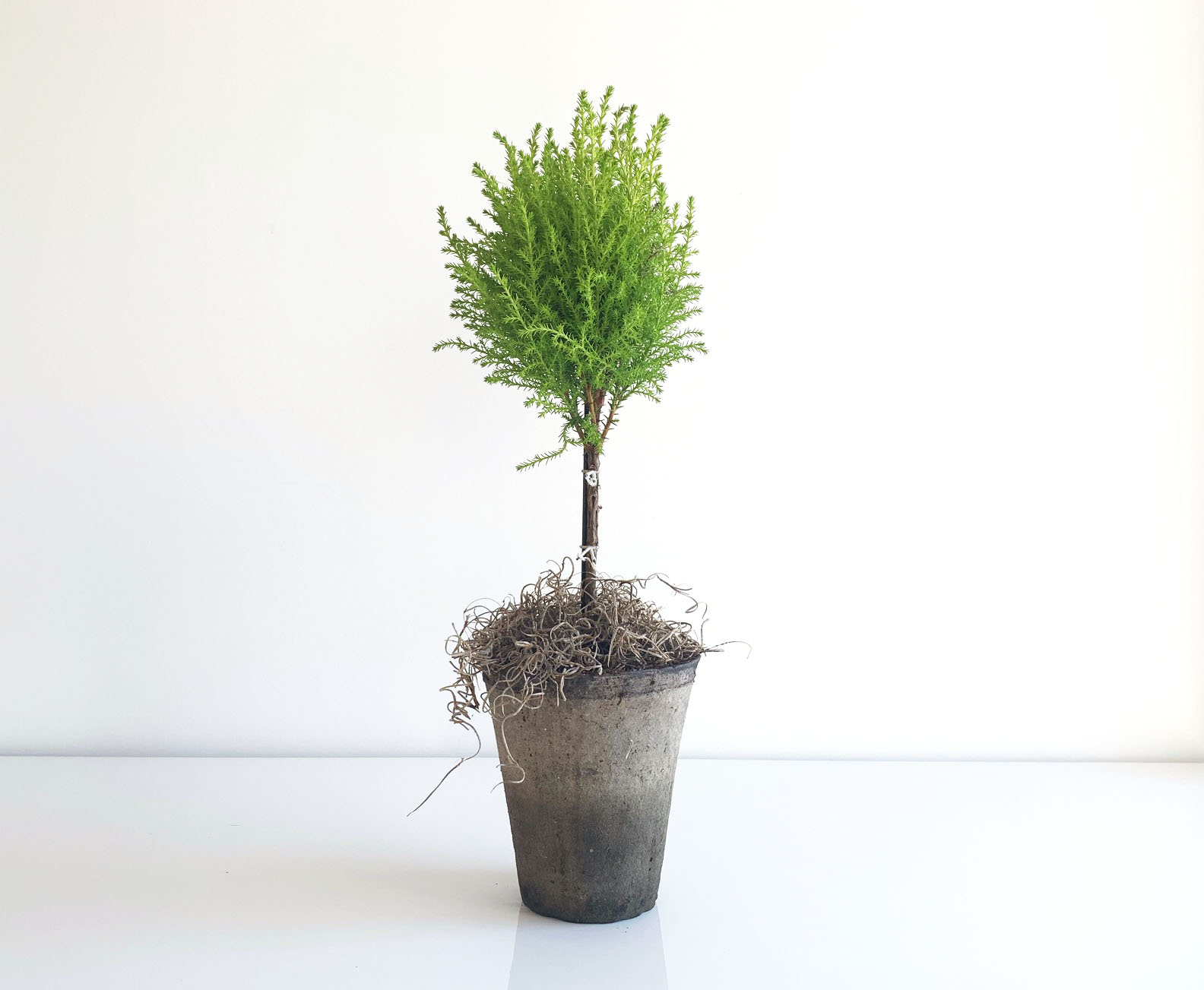 cypress-topiary
